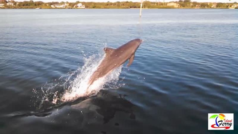 Egmont Key Snorkeling Shelling And Dolphin Watching At